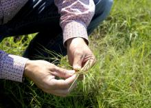 A man's hands are pictured holding a stem of grass.
