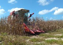 A red combine emerges from a field of dried corn.