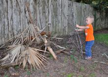 Preschool boy places a dead tree branch on a pile of limbs and leaves located beside an old, wooden privacy fence.