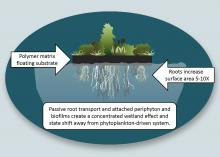 Illustration shows plants growing above water's surface with root system below.
