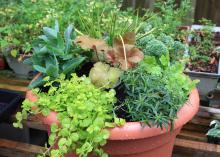 A brown, plastic container is filled with a variety of plants in varying shades of green. Some grasses stand above the other plants. Other foliage drapes over the sides.