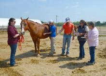 Five people stand around a brown horse in a dirt paddock. One person has her hands on the horse as she listens to its side with a stethoscope. Two women are holding notepads and listening.