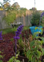 A bluish-purple flower balances on a long stem in front of other plants.