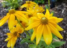 A small cluster of yellow flowers bloom at the top of green stems.