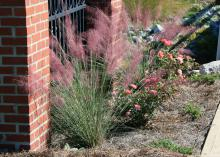 A tall clump of grass topped by pink flowers stands in front of a brick column.
