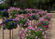Rows of planters filled with pink and purple blooms stand atop slender black posts.