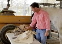 A man stands behind a table while demonstrating equine dental equipment on two horse skulls.