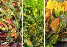 Three panels display colorful green, yellow and purple foliage.