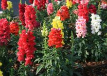 Flower-covered spikes in reds, yellow, pink and white rise above green plants.