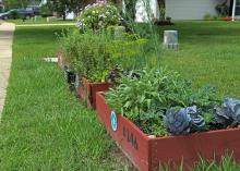 A wood frame contains a small garden growing in a lawn.