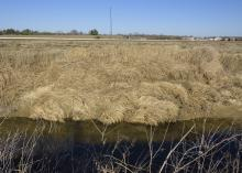 Tall, brown grass thickly covers a landscape.