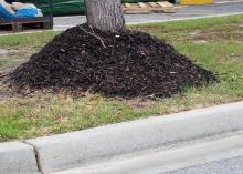 A tall, thick layer of mulch around the base of a tree.