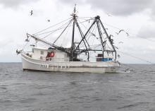 Fishing vessel trawls multiple nets for shrimp.