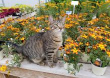 A cat sits on a bench in front of flowering, potted plants.