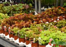 Small, potted plants are lined up in rows.