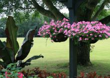 Two baskets covered in pink blooms hang from a post.