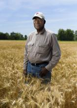 David Wade knows his Coahoma County, Mississippi, wheat would have produced better yields if persistent spring rains had not stunted the crop's development. He is standing in his wheat field on May 23, 2016, shortly before harvest. (Photo by MSU Extension Service/Kevin Hudson)