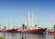 Crop failures in other countries, increased marketing of Gulf shrimp and lower fuel costs allowed the shrimping industry to bounce back over time. (Photo by MSU Ag Communications/Bob Ratliff)