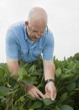 Mississippi State University plant pathologist Tom Allen said fungicide-resistant frogeye leaf spot in soybeans has recently become a major problem. (Photo by MSU Extension/Kat Lawrence)