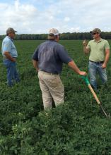 Mississippi State University researcher Jason Sarver, right, examines the condition of peanuts in a Leflore County, Mississippi, field on Sept. 10, 2015. With him, from left, is consultant Bruce Pittman and grower Justin Jeffcoat. (Photo by MSU Extension Service/Chad Abbott)