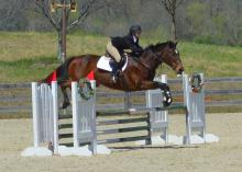 Alli George, a junior from Memphis, Tennessee, and Eventing Team vice president, competes with her horse, Belle of the Ball, in the show jumping phase of an eventing competition in Fairburn, Georgia, held April 4-5, 2015. (Submitted Photo)