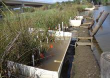 A team of scientists from Alabama and Mississippi constructed low-cost weirs, such as these, at the Weeks Bay National Estuarine Research Reserve to study the effect of rising sea levels on coastal wetlands. (Photo courtesy of Eric Sparks)