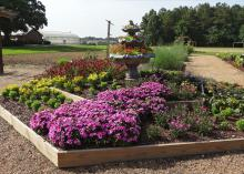 This raised bed at the Mississippi State University Truck Crops Branch Experiment Station in Crystal Springs captured the All-America Selection judges' hearts. They praised the beauty and tidiness of the garden, as well as the creativity of the fountain bed, which this year flowed with cascading flowers rather than water. (Submitted Photo)