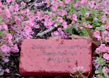 A painted paver offers a blank slate for writing plant information for display in the garden or landscape. A fresh coat of paint provides a clean surface for next year. (Photo by MSU Extension Service/Gary Bachman)