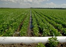 Production agriculture experts and producers can learn more about effective irrigation practices, such as this furrow irrigation using polyethylene pipe, at the Irrigation and Water Conservation Summit in Stoneville on Dec. 10. (File photo by MSU Ag Communications)