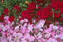 Nothing will perk up the neighborhood and your spirits like planting. Color in the landscape can certainly bring a renewed spirit. Some garden centers are already bringing in mums as well as fall blooming salvias, ornamental peppers, fresh marigolds, petunias and a host of other flowers.