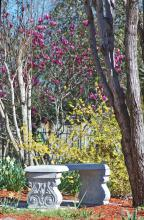 The warm, cheerful yellows of a large, naturally growing forsythia and a patch of daffodils complement the cool, deep purple flowers of a fine saucer magnolia. A concrete bench encouraging visitors to pause and take in the beauty of spring is the perfect finishing touch. (Photo by Norman Winter)