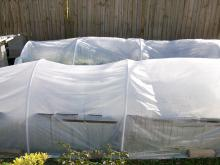 Use PVC pipe and plastic sheeting to make a simple greenhouse structure to provide cold-weather protection for landscape plants.