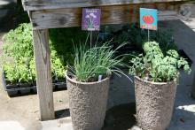 Fancy, hand-painted garden tags let visitors know these plants are valued. Use sparingly for the biggest impact.