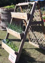 Place window boxes on a stepladder-type design for gardening that requires no bending. (Photo by MSU Extension Service/Gary Bachman)
