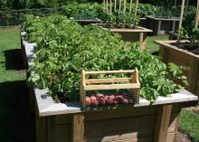 Raised beds bring many benefits to plants, but easy accessibility may be what has made them so popular. (Photo by MSU Extension Service/Gary Bachman)