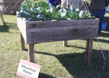 Tabletop gardens are perfect for those who require the help of wheelchairs or scooters. (Photo by MSU Extension Service/Gary Bachman)