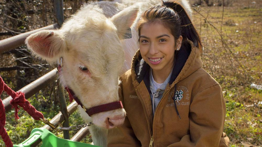 A female teen in a brown 4-H jacket, boots, and jeans squats beside a white cow moving toward its feeder.