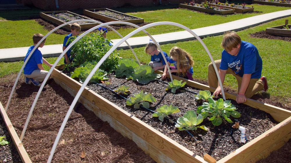 Six children, all dressed in blue T-shirts and slacks, bend over a raised bed garden with growing cabbages and tomatoes.