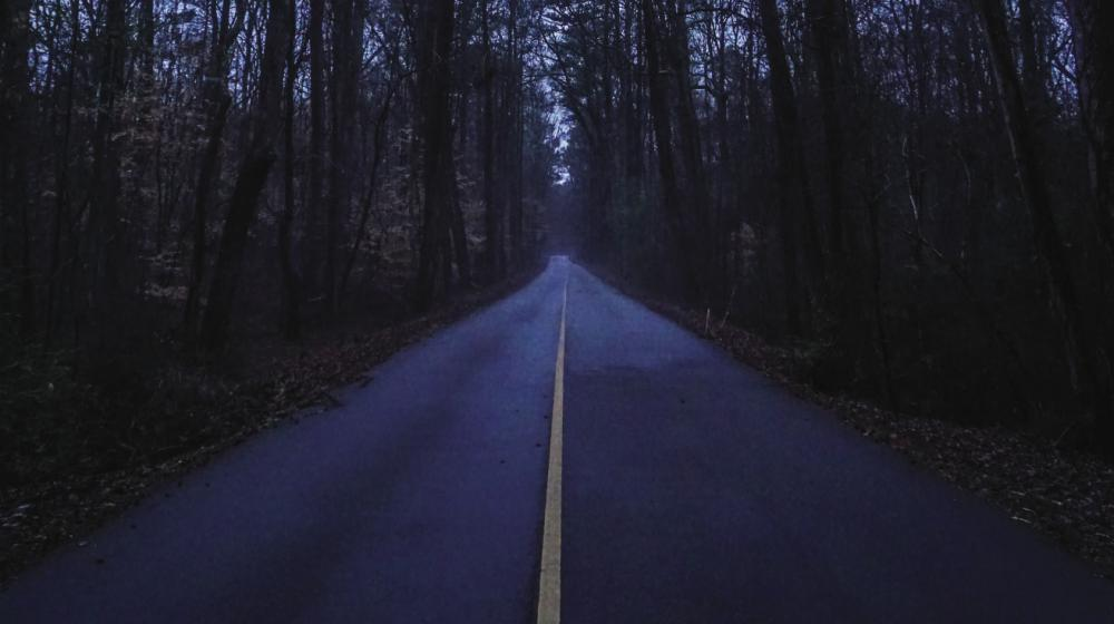 wooded paved road at dusk