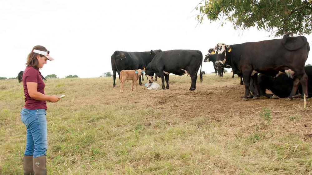 A woman wearing a white visor, maroon shirt, jeans, and boots marks a clipboard as five cows and three calves rest under a tree.