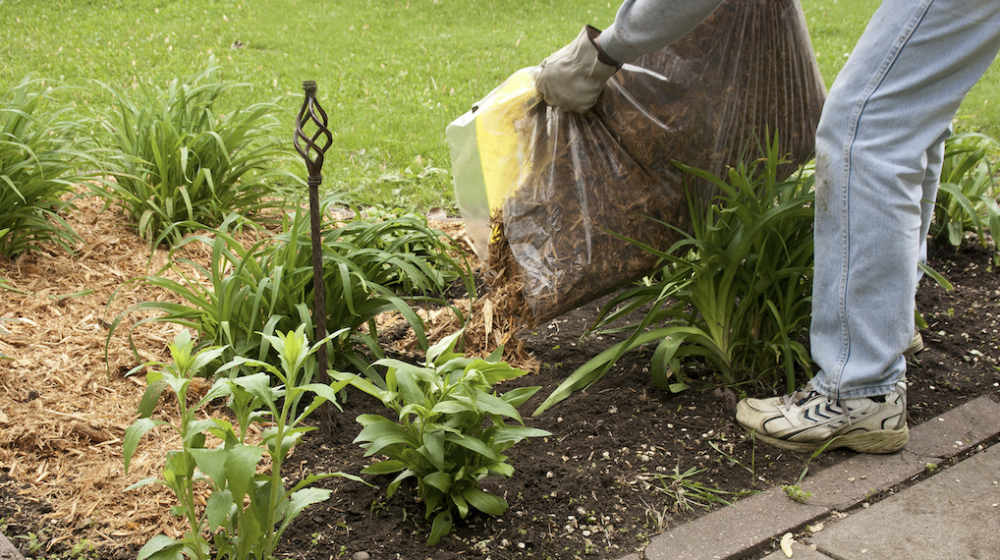 A person spreading mulch in a flower bed.