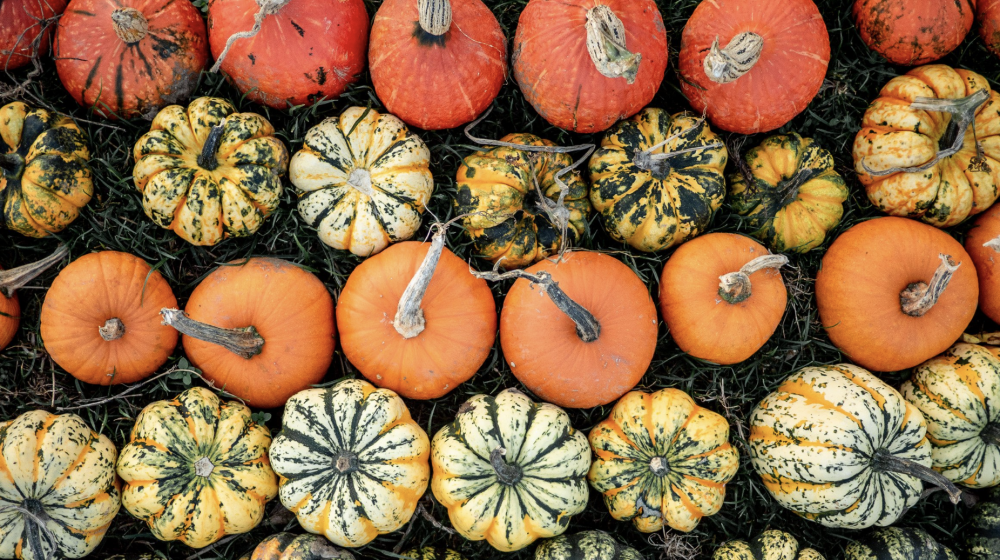 Different colored pumpkins in a line.