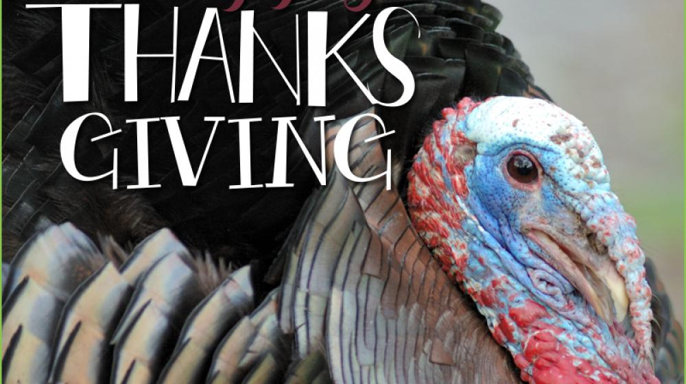 A colorful turkey with Happy Thanksgiving by Mississippi State University Extension Service.