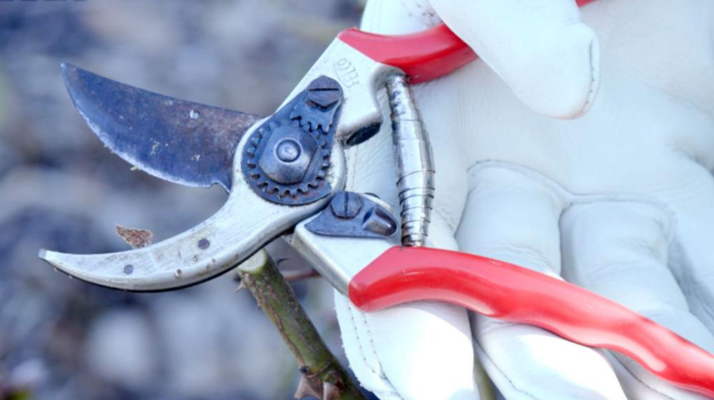 A closeup of a gloved hand holding a pair of bypass pruning shears.