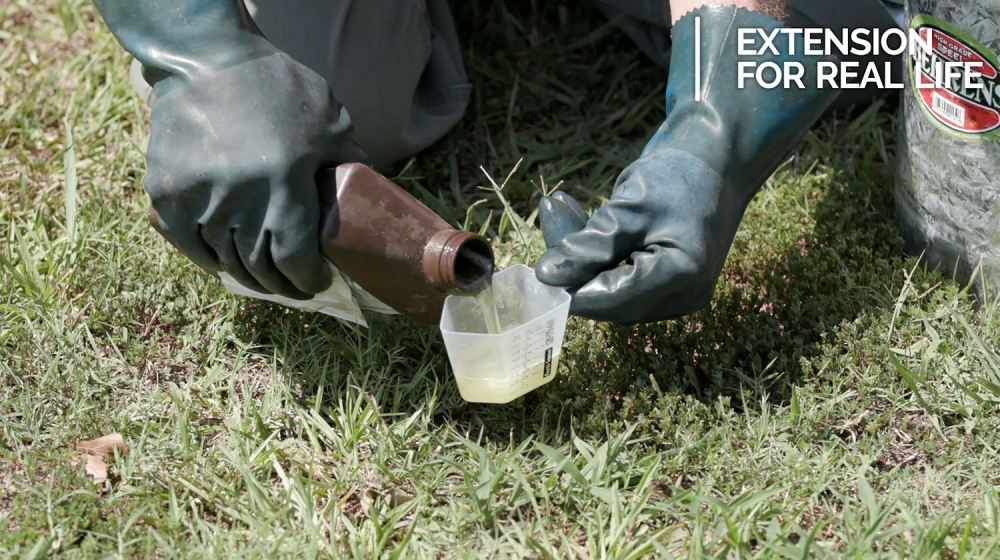 A close-up of gloved hands pouring a liquid drench pesticide into a measuring cup.