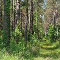 A green forest of trees.