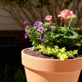 A flower pot with three types of full sun flowers sits in the sun.