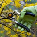 A person with green gloves pruning a tree with yellow leaves.