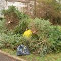 Real Christmas trees piled with curbside garbage