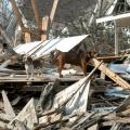 Hurricane Katrina displaced both family pets and large animals. (MSU Ag Communications file photo/Jim Lytle)